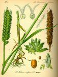 Növénytermesztés, növényvédelem